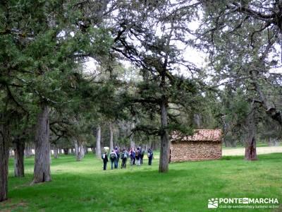 La Fuentona y el Sabinar de Calatañazor; actividades de montaña;las mejores rutas de senderismo de